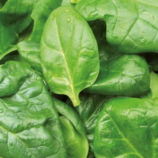 Rezept Spargelsalat mit Garnelen und Spinat